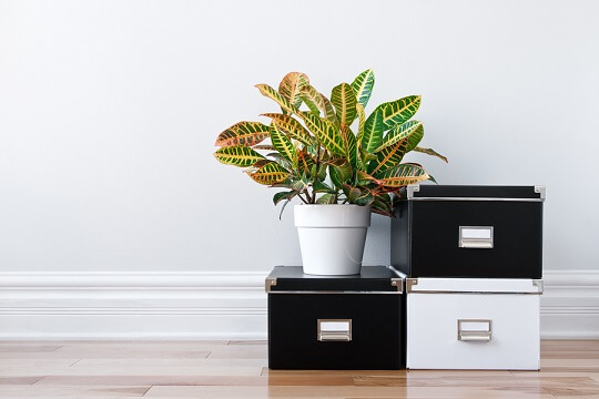 boxes and plant