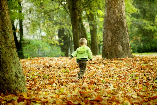 A toddler running through fallen leaves in the woods