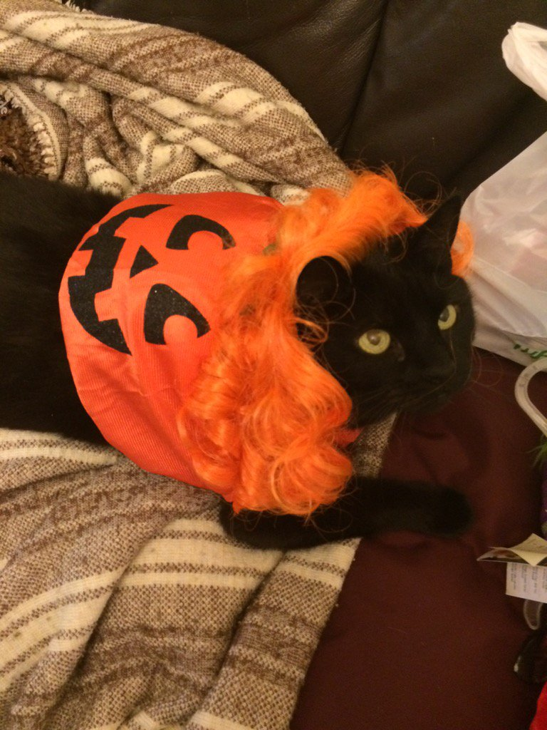 cat in costume