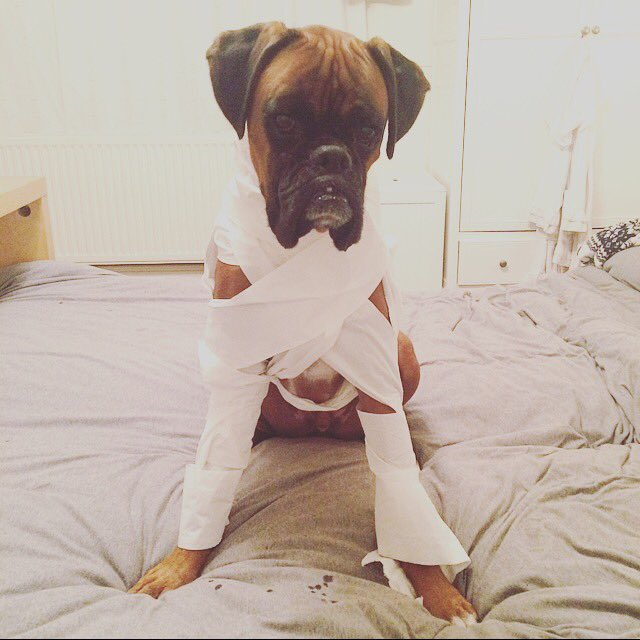 dog as mummy