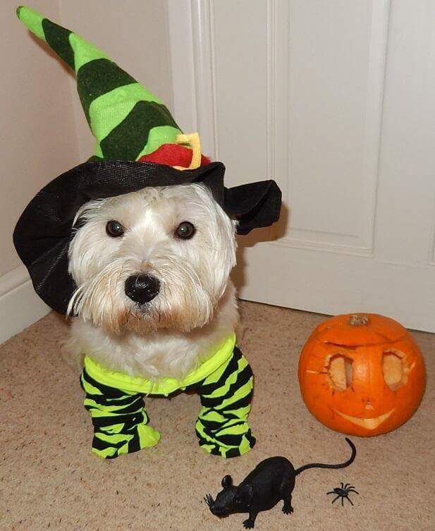 witch dog