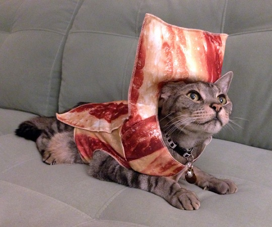cat in bacon costume