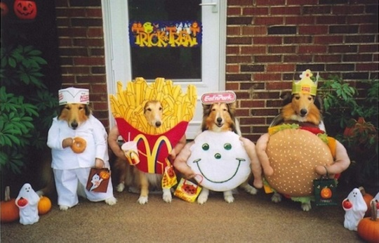 dogs in fast food costumes
