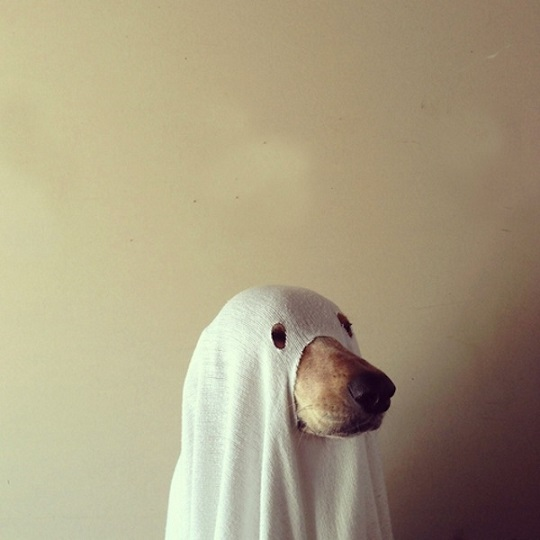 dog ghost